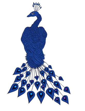 Twisting Peacock