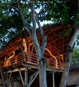 Tree-House-for-yoga